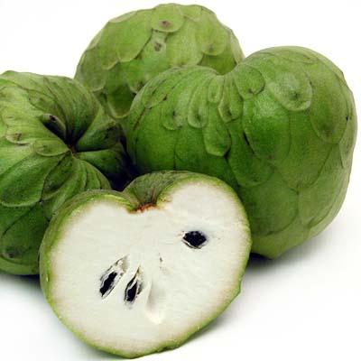 Graviola cherimoya cancer for Portent fruit